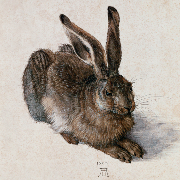 canvas painting poster classical style decorative art unframed picture Imagich Top 100 prints the Young Hare by Albrecht Durer